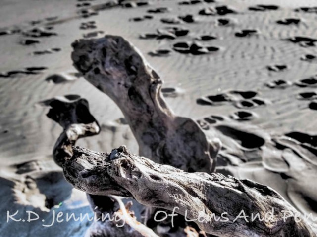 Gruissan Beach and Sea in Winter Driftwood Aude South of France