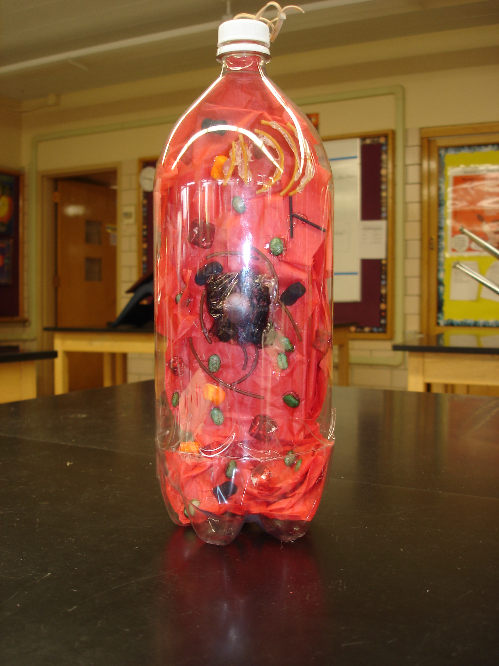 Projects - 7th   Mrs. Du Houx's Science Classroom on Model Ideas  id=35631