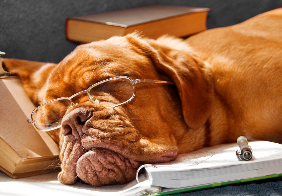 book-writing-process-have-you-dog-tired