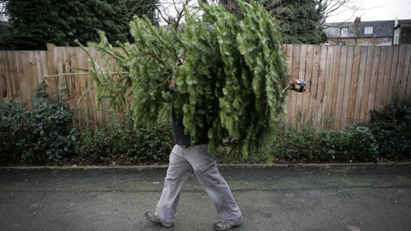 Christmas trees are discarded in Prioty Park, north London. (Photo: Leon Neal/AFP/Getty Images)