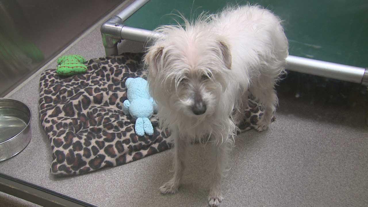 Dog at Denver Animal Shelter