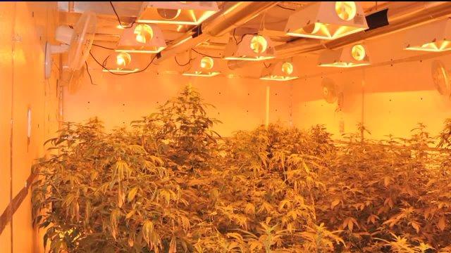 Pot growing operation in rental house in Watkins, Colo.