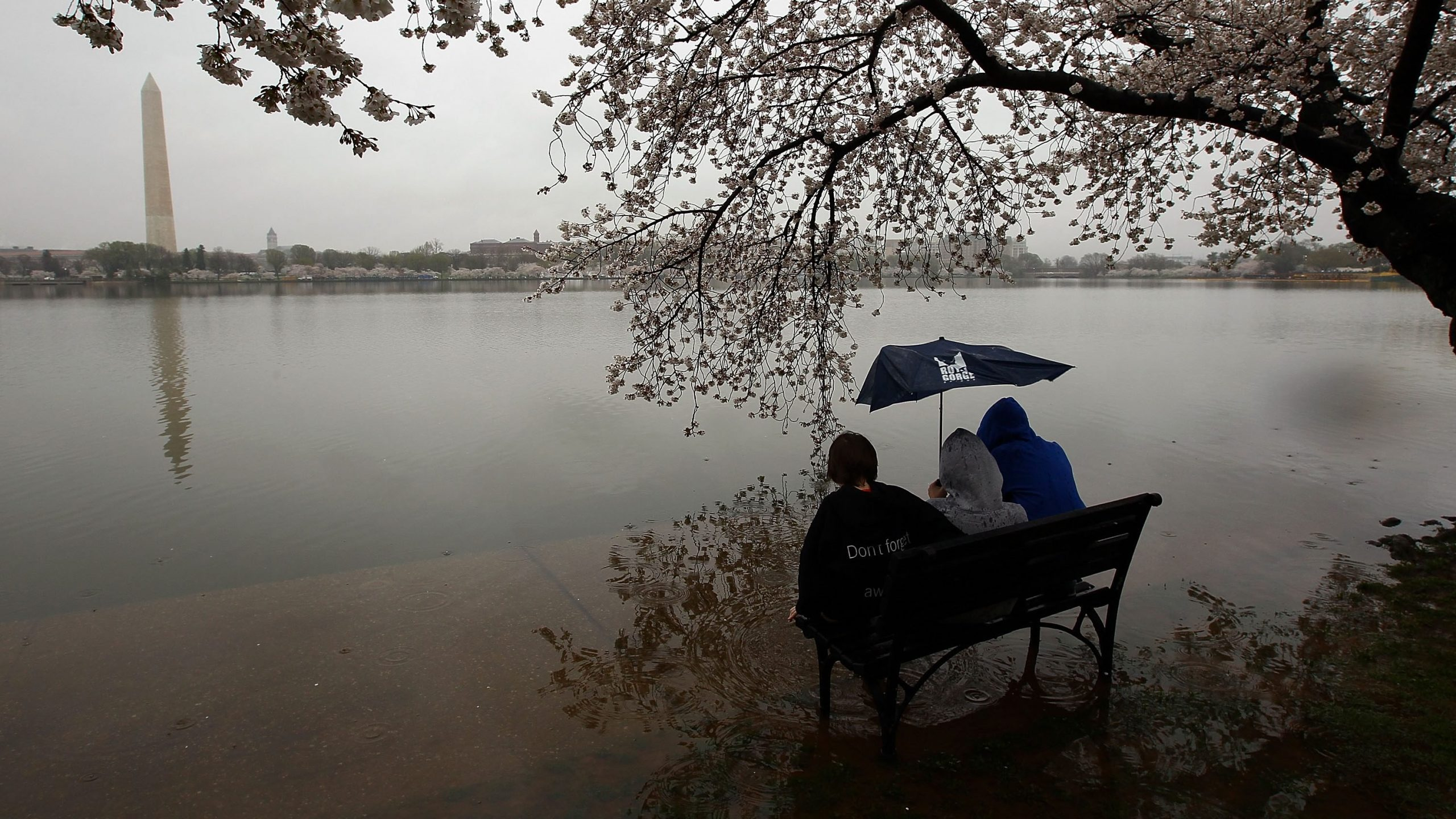 Maxewell Rees and his brothers Daniel Rees and Jackson Rees sit on a park bench partly submerged due to seasonal flooding next to the Tidal Basin as cherry blossoms begin their annual blooming season March 29, 2010 in Washington, DC.