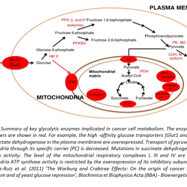 CANCER CELL IS CHARACTERISED BY HIGH RATE OF GLYCOLYSIS