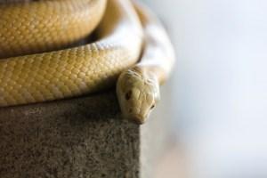白蛇画像効果
