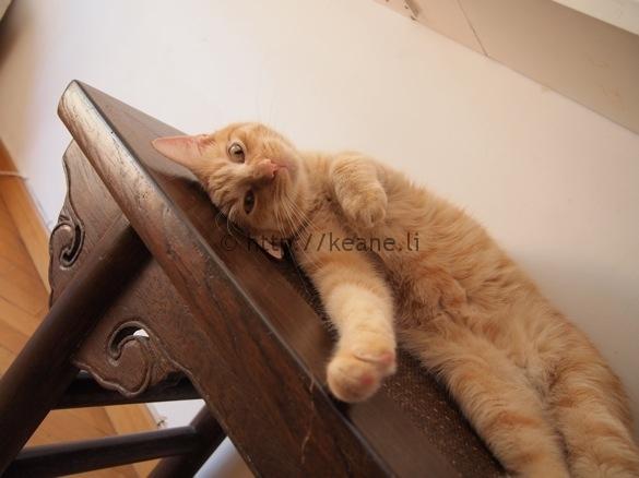 Photo of my cute cat flatmate in Rome
