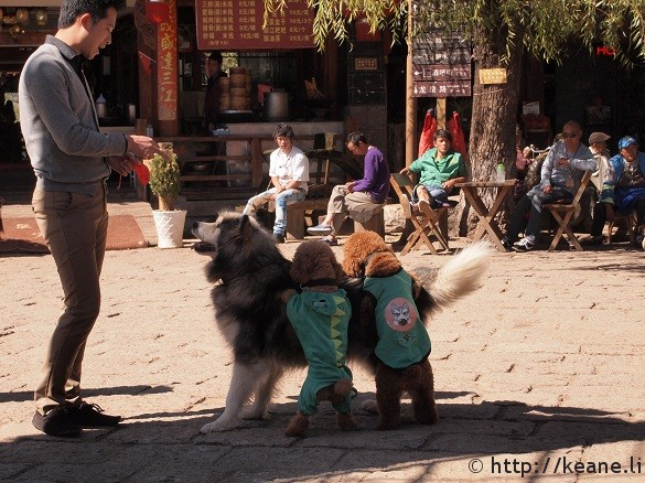 Three dogs in Lijiang's Shu He Ancient City at Sifeng Square