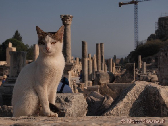 Cat in Ephesus (photo)