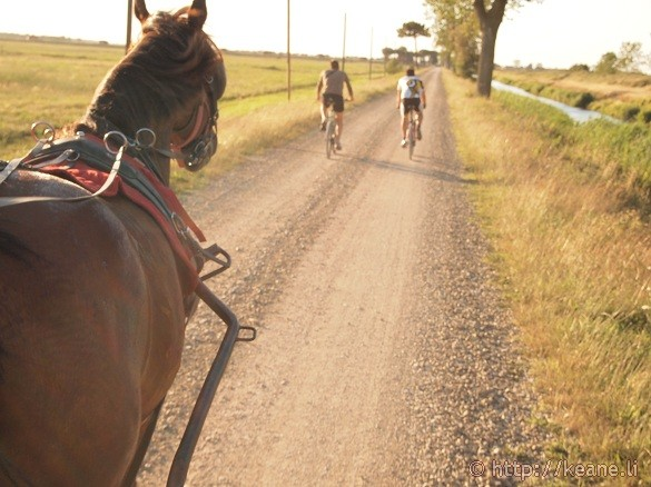 Horse-drawn carriage through the natural reserve of Foce Bevano in Savio