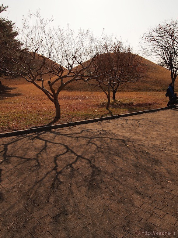 Trees and Shadow in Gyeongju Temple Grounds