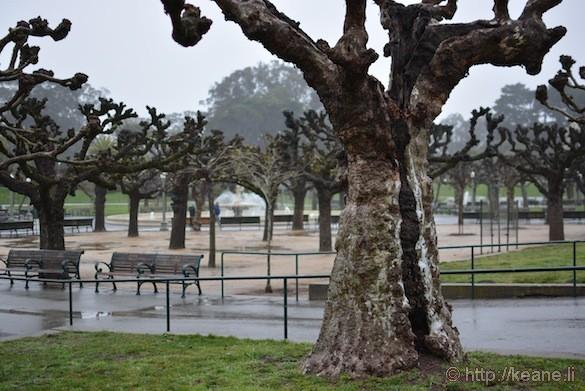 Trees in Golden Gate Park in the rain