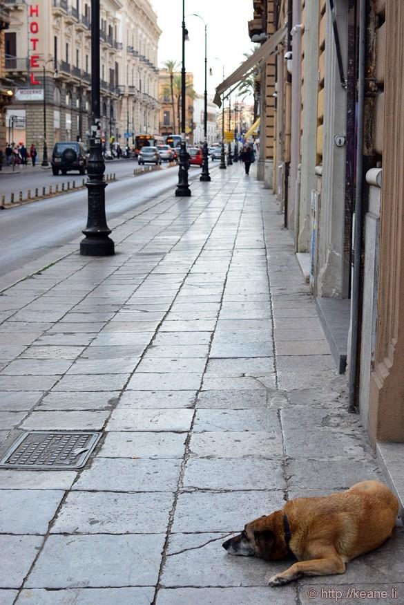 Lazy Dog on a Main Palermo Street