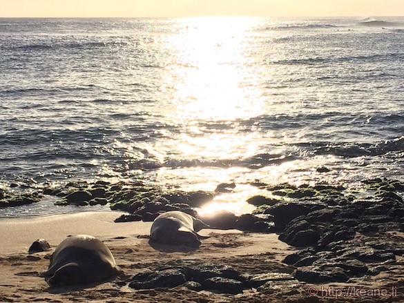 Kauai - Monk Seals at Poipu Beach