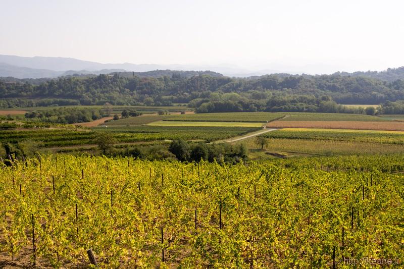 View from Azienda Vitivinicola Specogna