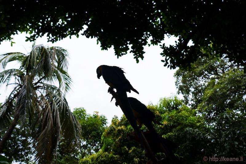Silhouette of Parrot in Cartagena