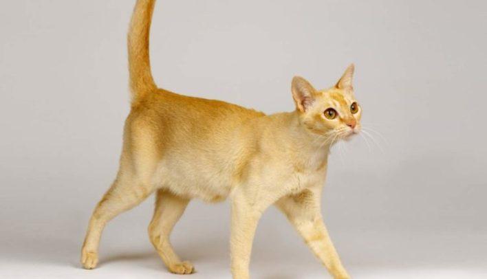 ideal-kilo-kedi