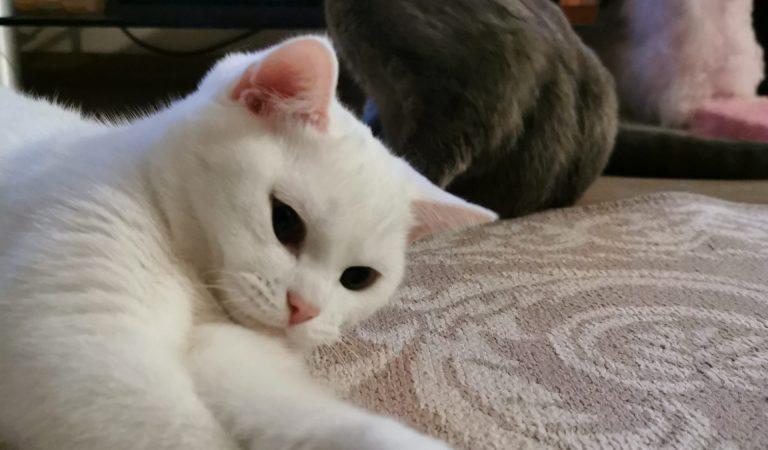 Kedi Sesi I Kedi Miyavlaması