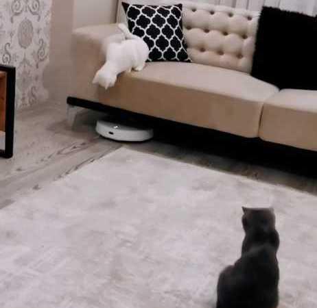 Robot Süpürge Gören Masum Kediler