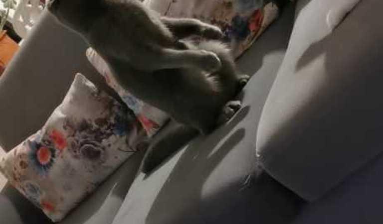 Kedi Kavgası I Kedi Oyunu