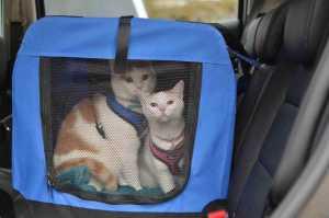 kedilerle seyahat