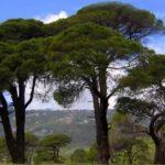 A 3 fa története! 5 perc alatt elolvasod, de egész életedben emlékszel majd rá!