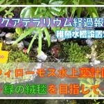 アクアテラリウムの経過報告と稚魚水槽設置!