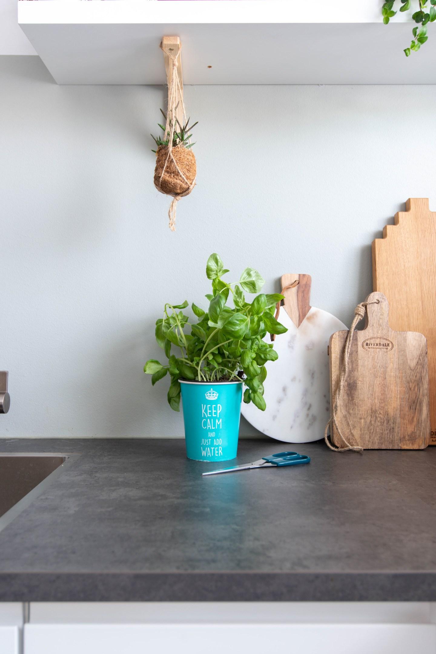 keeelly91 waterwick kruidenplant basilicum groene vingers keuken eetbaar systeem levende plant tips