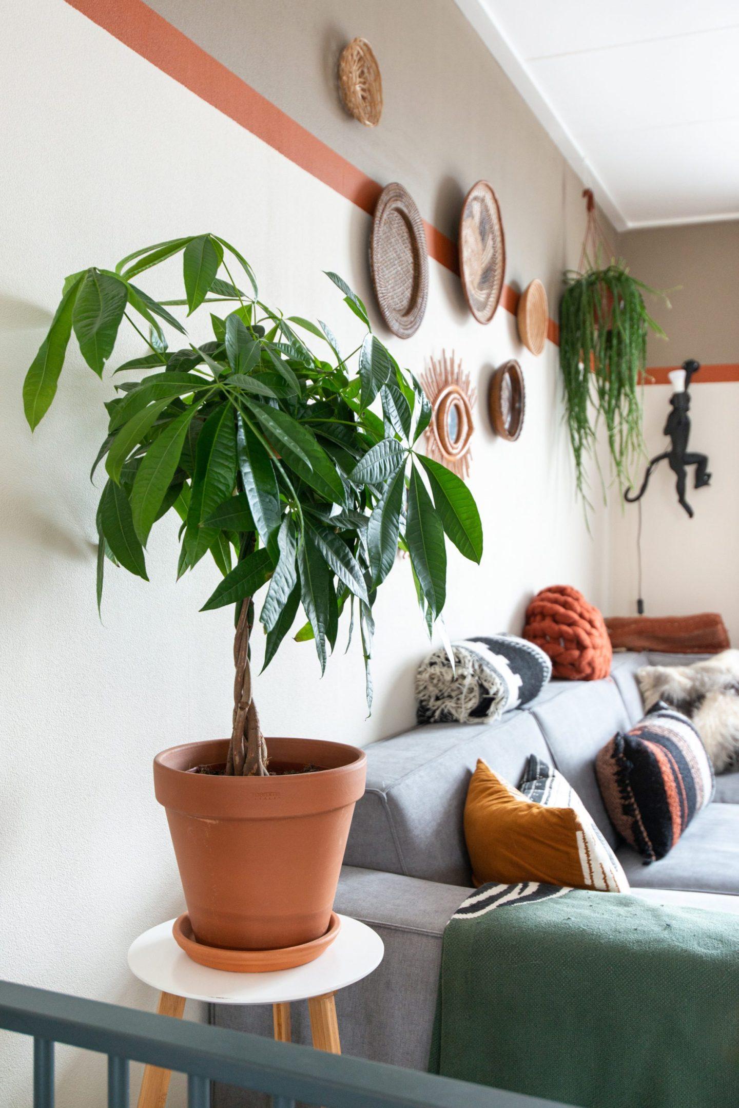 keeelly91-muurkleur-interieur-blogger-planten-pachira-woonkamer-bohemian-walldecoration-wonen-fotograaf-modernboho