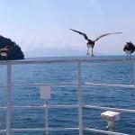 【京都】伊根観光におすすめ!~伊根湾めぐり遊覧船~カモメと一緒に舟屋群が楽しめる♬
