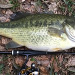 ブラックバスをもっと釣る為のシーズナルパターン&ルアーを使った季節別の釣り方