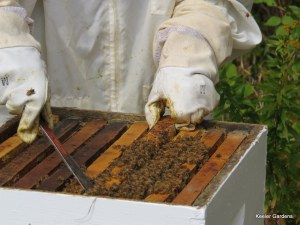 Bee keeper demonstrates their craft at a local educational series on honey making.