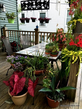 Two chairs sit at a table on a deck which is laden with containers filled with elephant ear, wandering jew, succulents, alyssum, floss flower, petunias, creeping jenny, and Algerian ivy. All are placed on the wooden deck, table, and suspended throughout from both hangers and metal art.