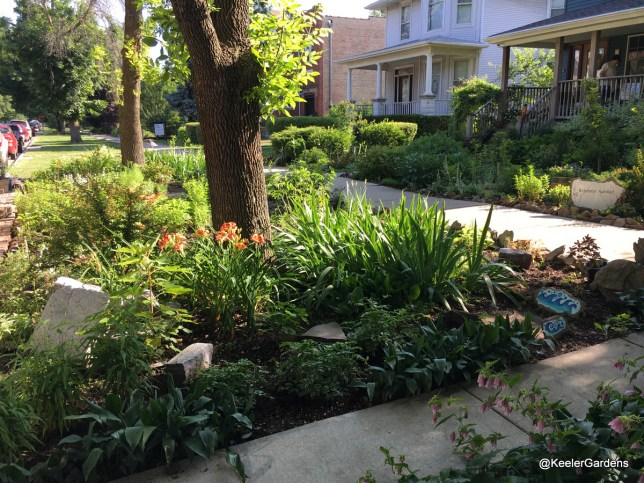 A picture of Keeler Gardens' new pollinator habitat, taken from the curb. In the foreground is the habitat, planted with natives and studded with raised stepping stones. Keeler Gardens' front garden and front steps are visible in the back right.