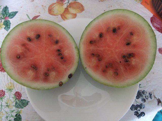 Success with Watermelon Landrace in Colorado (3/5)