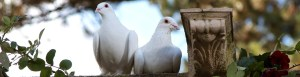 Doves perched on a wall