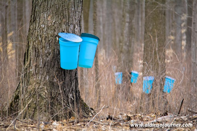 Maple Syrup Sugar Bush Tour in Elmira.