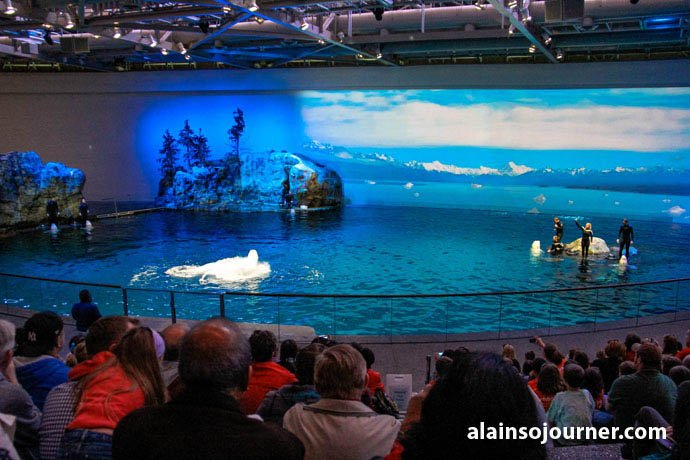 Shedd Aquarium Chicago Things To Do 14