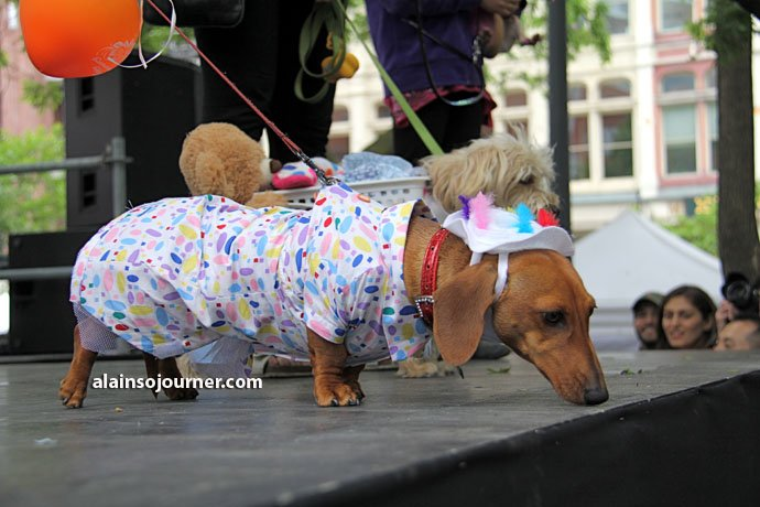 Woofstock Toronto Festival of Dogs 26