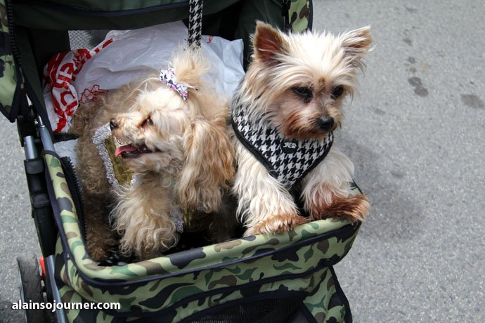 Woofstock Toronto Festival of Dogs 36