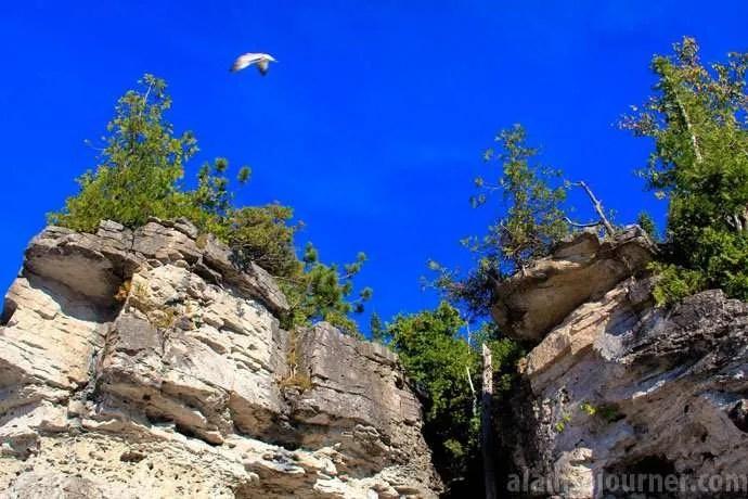 Bruce Peninsula Georgian Bay Birds