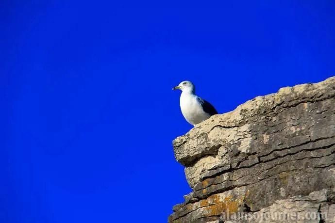 Bruce Peninsula Birds