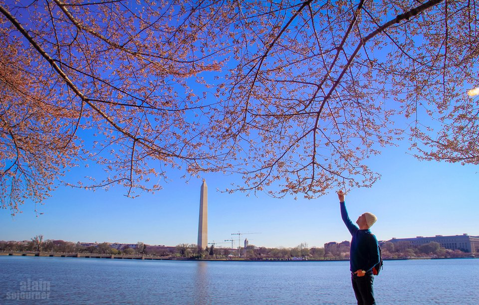 5 Essentials To Planning Your Trip In The United States 25 Photos of the Cherry Blossoms 2014 in Washington DC