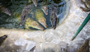 Davao Crocodile Park, Philippines.