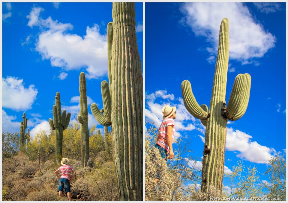 These giant cactuses dwarfed me.