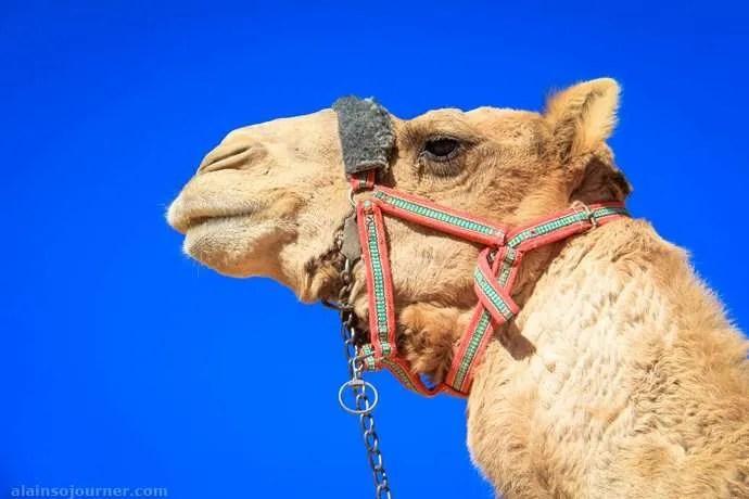 Jordan Camel Portraits