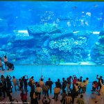 Mall of Dubai Aquarium and Underground Zoo