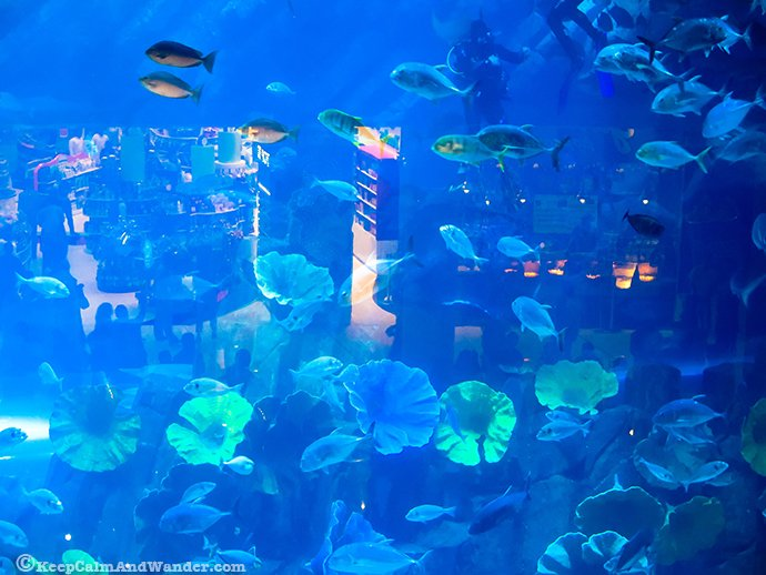 Mall of Dubai Aquarium and Underground Zoo.
