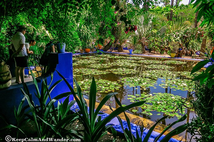 Majorelle garden in marrakech here lies yves st laurent - Jardin majorelle yves saint laurent ...