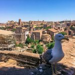 Photos: A Leisurely Walk at the Roman Forum and Palatine Hill