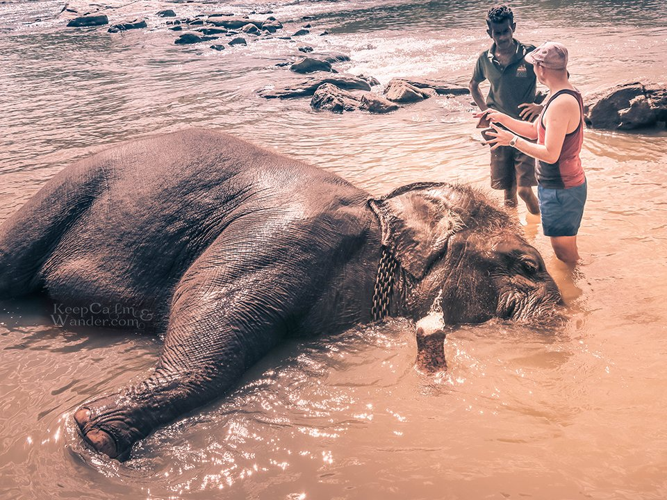 I Bathed an Ellie at Pinnawala Elephant Orphanage and I Instantly Regretted it! (Sri Lanka).